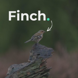 The Finch Podcast